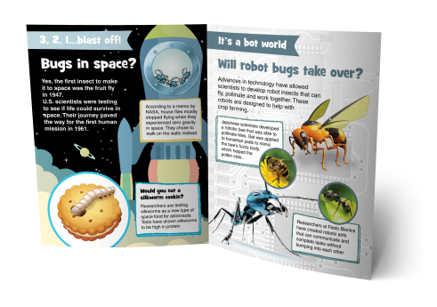 bug-facts-interior-image-double-01-1