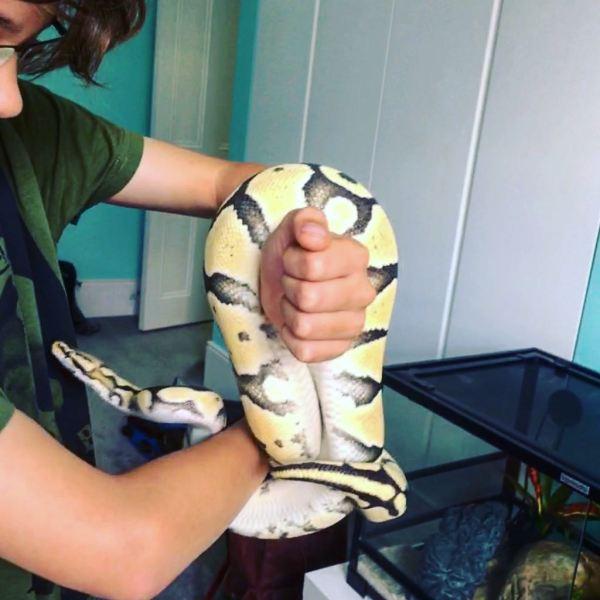 snake-pet